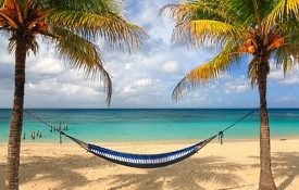 hammock and palm trees on beautiful beach in Roatan Honduras
